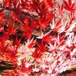Kyoto en Kimono d'automne
