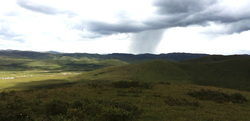 Grassland Prairie Couvert M
