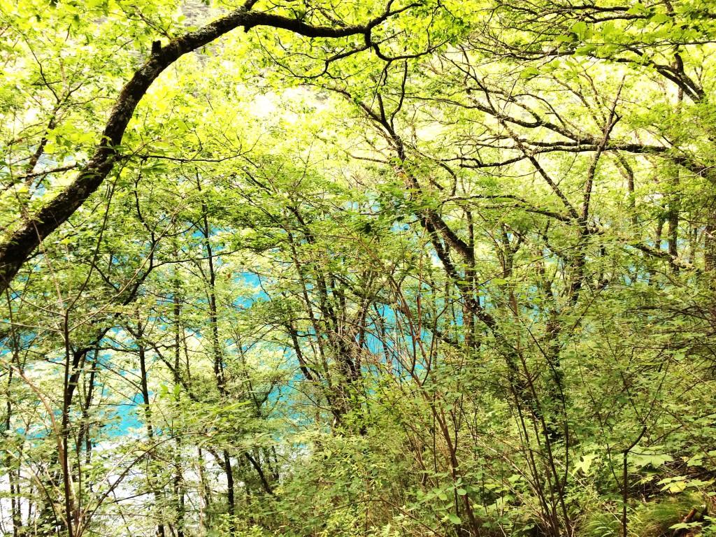 Jiuzhaigou Forêt 6 M