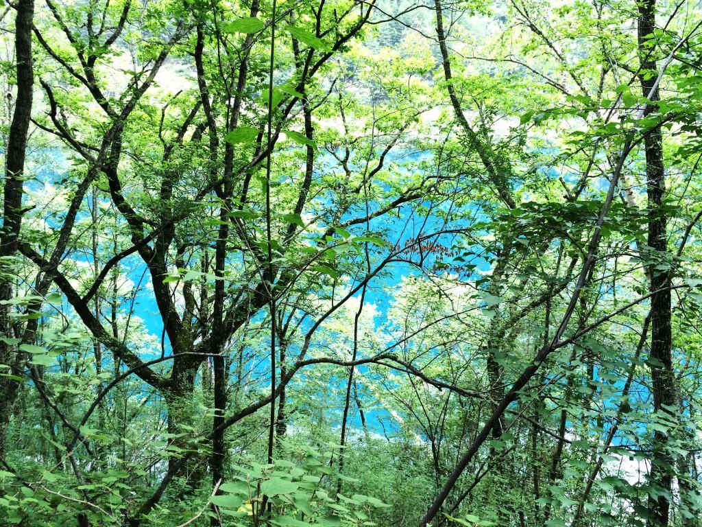 Jiuzhaigou Forêt 7 M