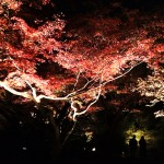 Kyoto Shorenin 1