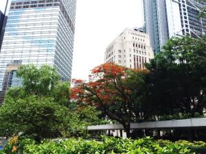 CapdeChine Hong Kong bond connect