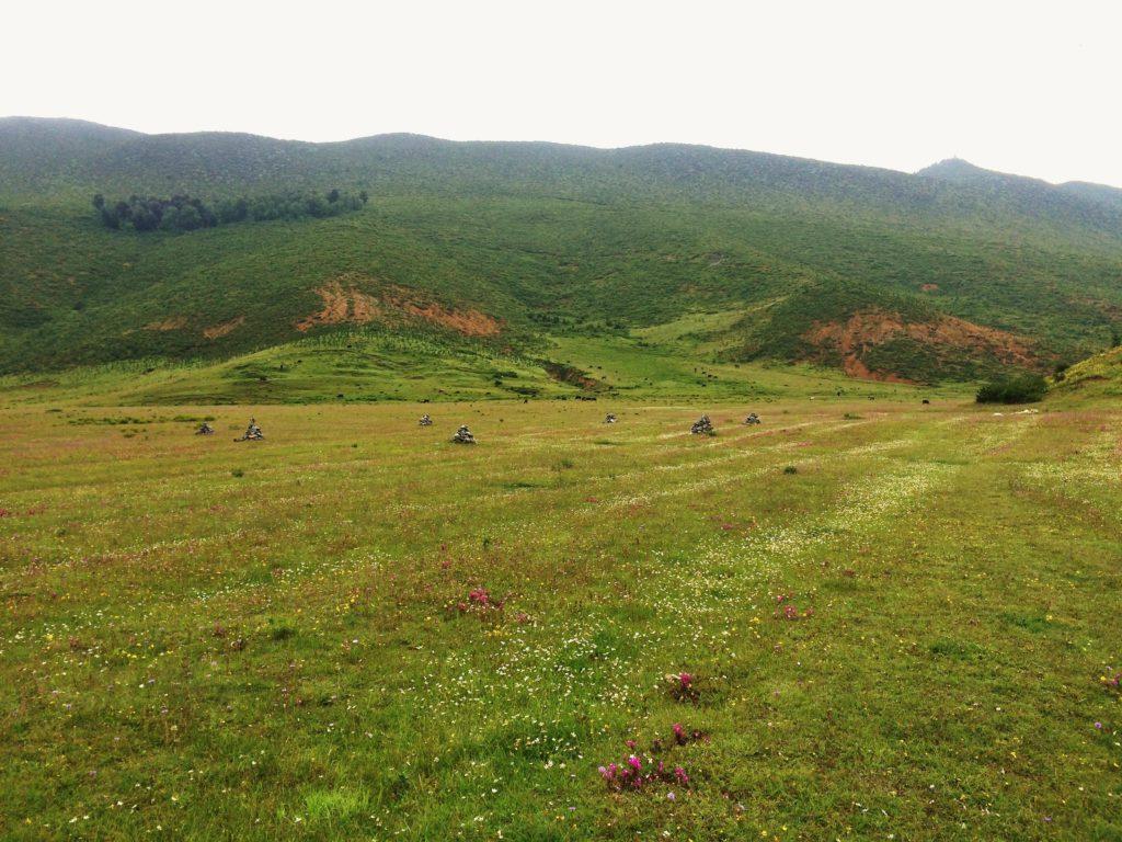 Au sud des nuages Shangri La Songtsam prairie à perte de vue fleurs